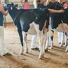WesternNY2018-Holstein-0007