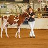 WesternNY2018-Holstein-0004