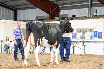 Western Spring National Holstein Show 2018