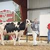WesternNatl2018-Holstein-2744
