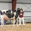 WesternNatl2018-Holstein-2742