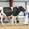 WesternNatl2018-Holstein-2752
