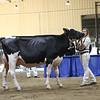 Westernerchp18-Holstein-0765