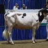 Westernerchp18-Holstein-0749
