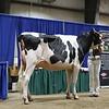 Westernerchp18-Holstein-0751