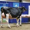 Westernerchp18-Holstein-0752
