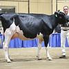 Westernerchp18-Holstein-0753