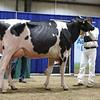 Westernerchp18-Holstein-0767