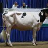 Westernerchp18-Holstein-0750