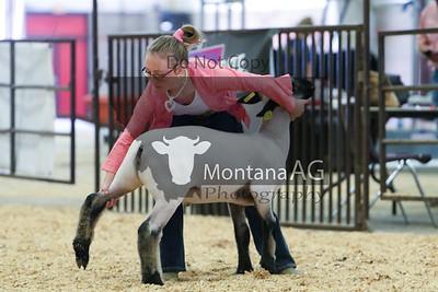 montanaag-6