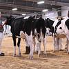 WIState18_Holstein-6646