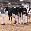 WIState18_Holstein-6645