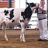 WIState18_Holstein-6638
