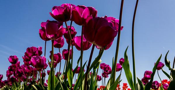 Woodland, WA Flowers