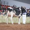 WDE18-Holstein-1M9A6522