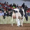 WDE18-Holstein-1M9A6515
