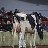 WDE18-Holstein-1M9A6517