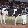 WDE18-Holstein-1M9A6520