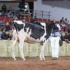 WDE18-Holstein-1M9A6521