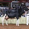 WDE18-Holstein-1M9A7617