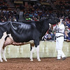 WDE18-Holstein-1M9A7620