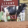 WDE18-Holstein-1M9A7623