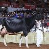 WDE18-Holstein-1M9A7618