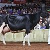 WDE18-Holstein-1M9A7619