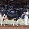 WDE18-Holstein-1M9A7621