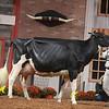 WDE18-Holstein-1M9A7614