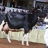 WDE18-Holstein-1M9A7616