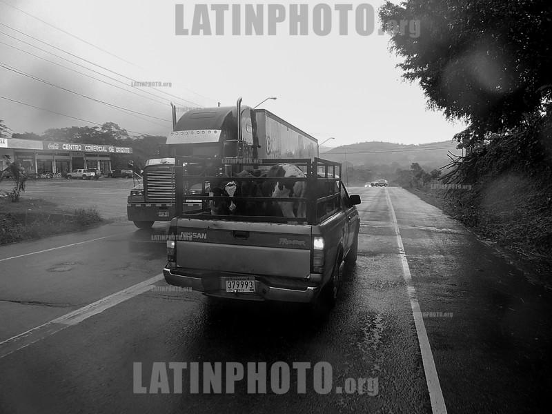 Costa Rica - Panama : Frontera entre costa rica y panama , paso canoas / Trucks on the ferry near the border between Costa Rica and Panama / Costa Rica - Panama : Lastwagen auf der Fähre bei der Grenze zwischen Costa Rica und Panama © Henry von Wartenberg/LATINPHOTO.org