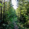A Path through green