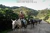 Cuba : Vista de los campos de la provincia de  Santiago de Cuba Arriero 11 de enero de 2017 / Kuba :  Mann mit Pferden © Agustín Borrego Torres/LATINPHOTO.org
