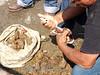 Chile : Pescador limpiando piure ( pyura chilensis ) El piure se sirve tradicionalmente crudo , bañado en limón recién exprimido - También se puede combinar con una salsa verde de cebolla picada , cilantro , cebolletas , sal,  aceite y jugo de limón - En el sur de Chile es común encontrar combinaciones de piure seco y ahumado, que cuelgan en los mercados y se usan en sopas y guisos / Chile : Port of Arica in the north of Chile - It is one of the most active ports in terms of seafood trade in Chile - Also a must see tourist site / Chile : Hafen in Arica im Norden Chiles - Einer der aktivsten Häfen in Bezug auf den Handel mit Meeresfrüchten - Tourismus © Henry von Wartenberg/LATINPHOTO.org
