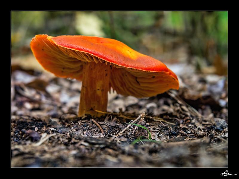 Mois 10 - Orange 3 de 5