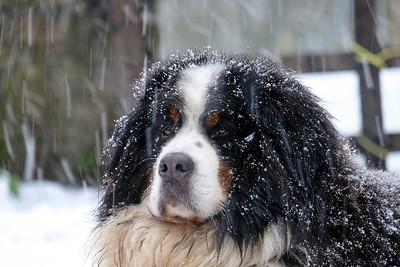 JAN SNOW FRED (7)