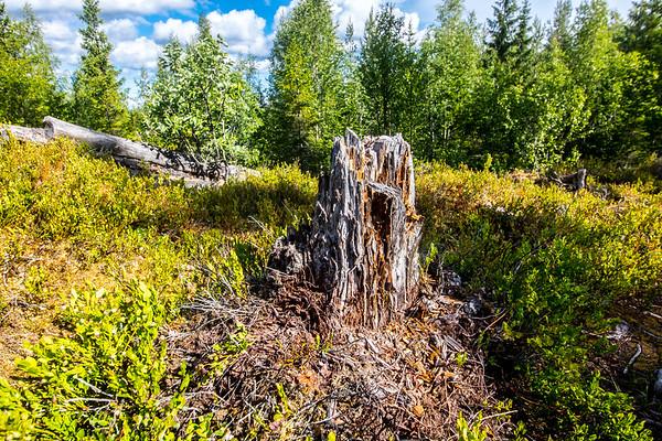 A cool little stump