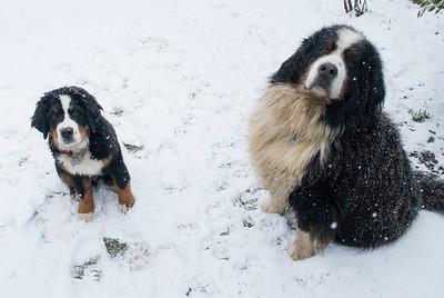 boys snow feb 2018 (8)