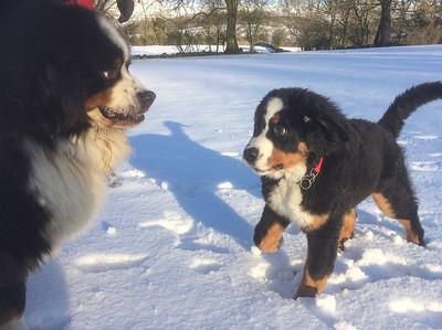 JAN 2018 SNOW LINDS DOGS  (9)