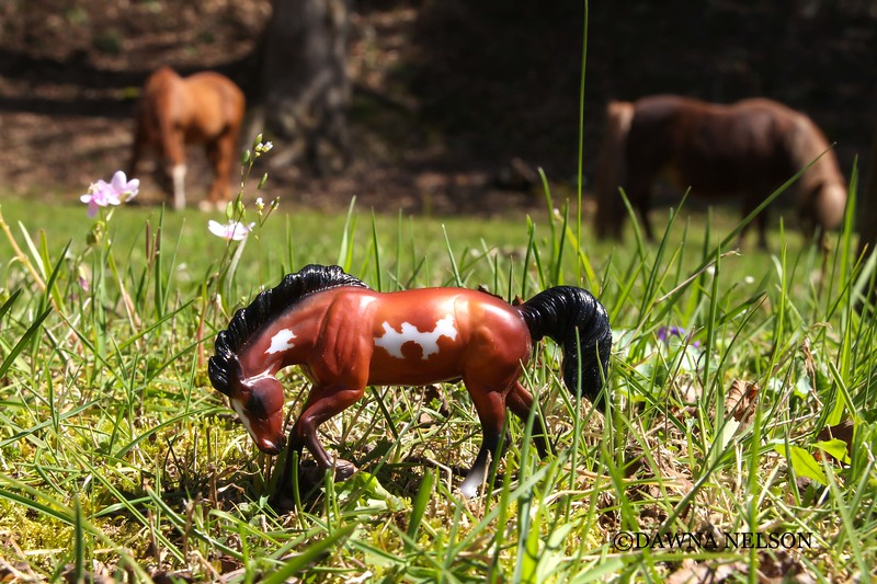 Playing with Breyer Stablemates.  4/21/2018