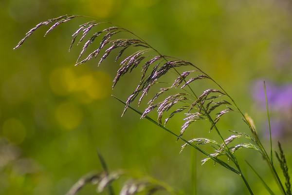 Just grass
