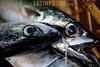 Bolivia : peces , pesca / Bolivien : Fischer © Patricio Crooker/LATINPHOTO.org