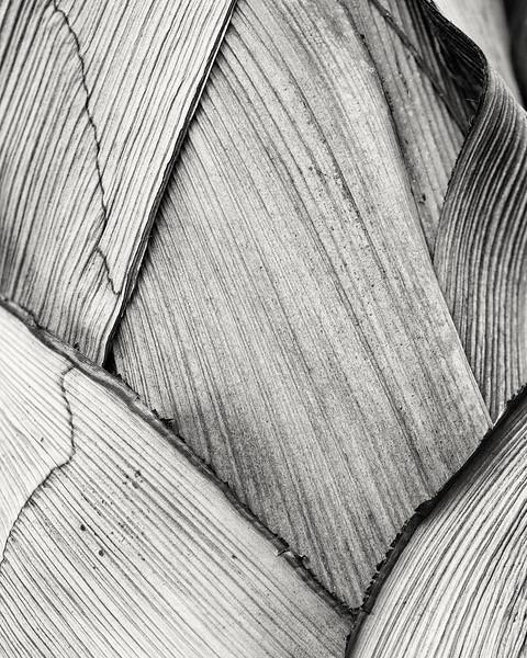 palm trunk