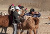 Argentina : Llama caravan , ancestral way to trade between native inhabitants , Jujuy province / Argentinien : Lama -Karawane in der Provinz Jujuy  © Silvina Enrietti/LATINPHOTO.org