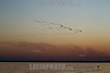 Bolivia : bandada de aves / swarm of birds / Bolivien : Vogelschwarm - Vögel © Patricio Crooker/LATINPHOTO.org