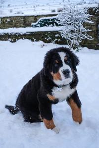 JAN SNOW TOM (1)