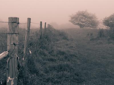 South Downs Fog