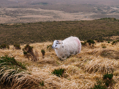 Made friends with a sheep on Dimond Hill.