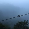 A little dove sits on the barn power line almost every morning.  8/31/2018